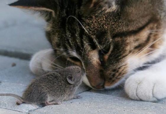 Кошки-Мышки: как нами играют профессионалы рынка Часть 1