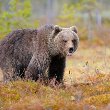 Рынок жесток… или История про диких медведей, которые съели наивного парня…